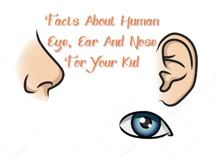 Facts about human eye, ear and nose