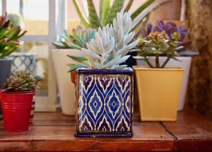 Indoor Plants for Living Room