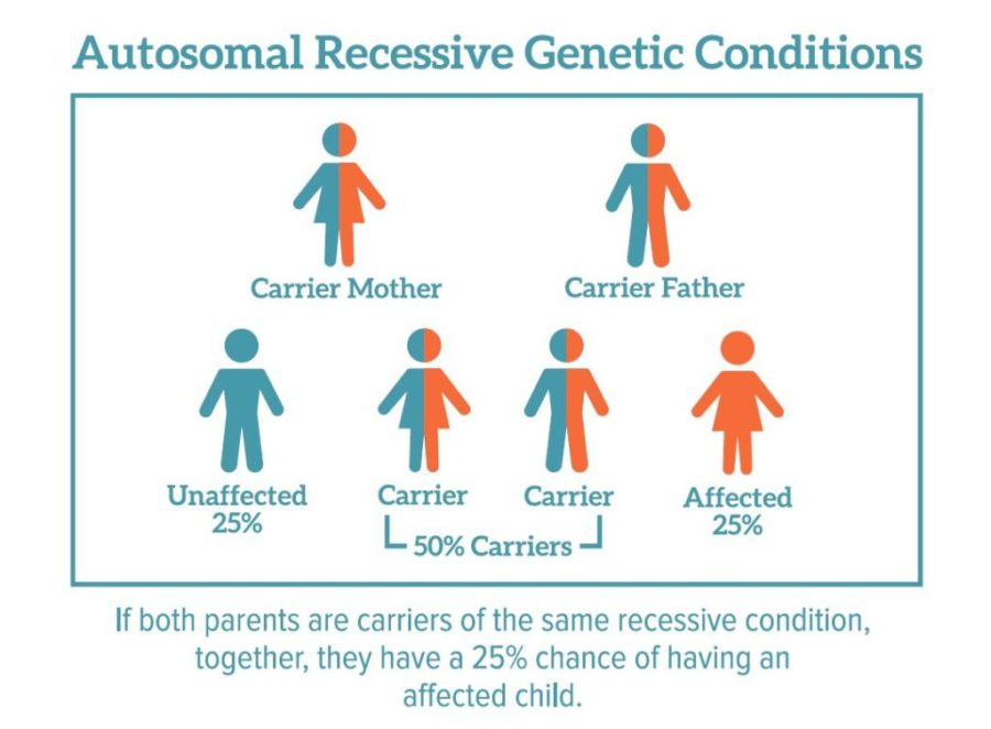 Pros And Cons Of Genetic Testing Before Pregnancy